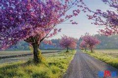 《一棵开花的树》-席慕容
