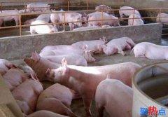 今日猪价继续大范围下滑 全国猪价行情播报