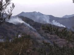 今日新鲜事:甘肃陇南发生森林火灾