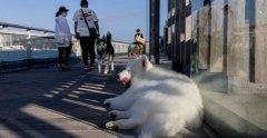 香港患者宠物感染新冠病毒 成世界首例