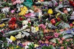 今日新鲜事:荷兰销毁百万鲜花