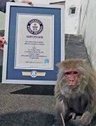 42岁猕猴获世界纪录