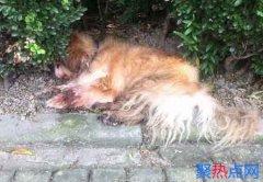 上海首例养犬人遗弃犬只案