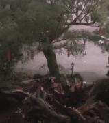 广东1100多岁古榕树倒塌