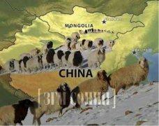 蒙古国捐赠3万只羊将分批入境