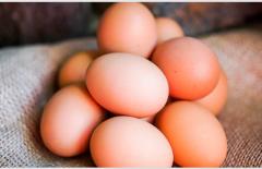 十大高蛋白食物排行榜