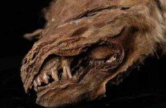 永久冻土中发现57000年前小狼崽