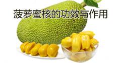菠萝蜜核的功效与作用