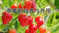 草莓的功效与作用