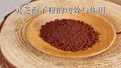 灵芝孢子粉的功效与作用