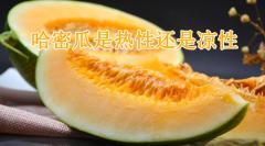 哈密瓜是热性还是凉性