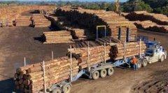 澳大利亚向中国请求恢复木材出口