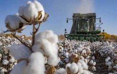 关于新疆棉花的6个事实