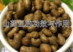山药豆的功效与作用