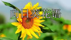 向日葵花语(1秒知道向日葵的花语和