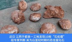 江西工地挖出6600万年前恐龙蛋化石