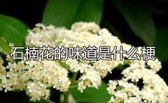 石楠花的味道是什么梗