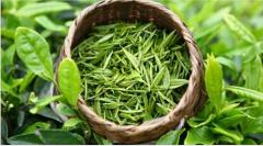 绿茶的功效与作用
