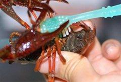 小龙虾怎么清洗和处理