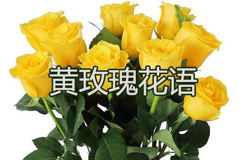 黄玫瑰花语