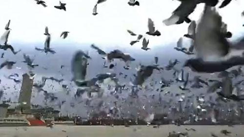 庆祝大会首次放飞10万羽和平鸽