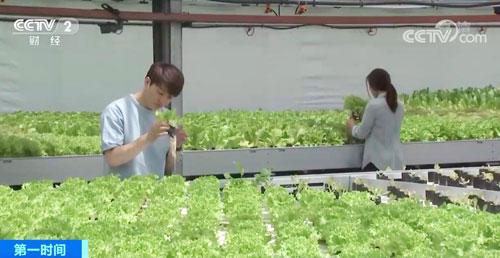 韩国越来越多青年返乡务农