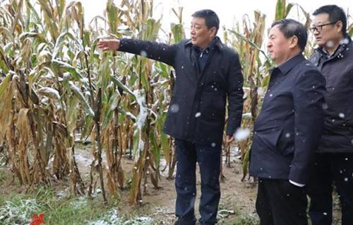 市委书记市长到田间抢收玉米